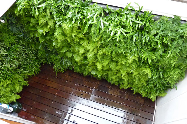 Beautify Your Balcony With Vertical Garden
